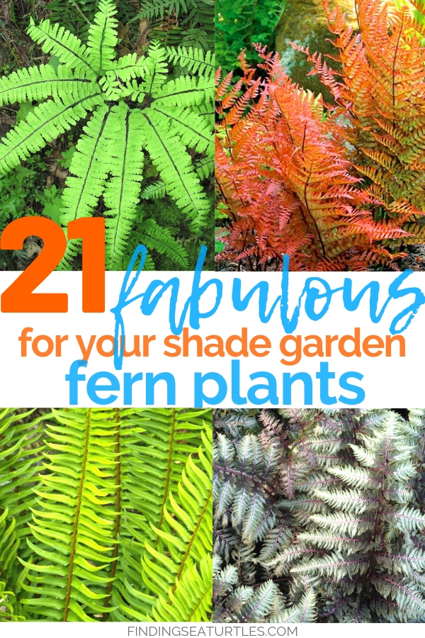 21 Fabulous Ferns for your Shade Garden #Ferns #Garden #Gardening #Shade #ShadeLoving #ShadeLover #ShadeGarden #Landscape #Woodlands