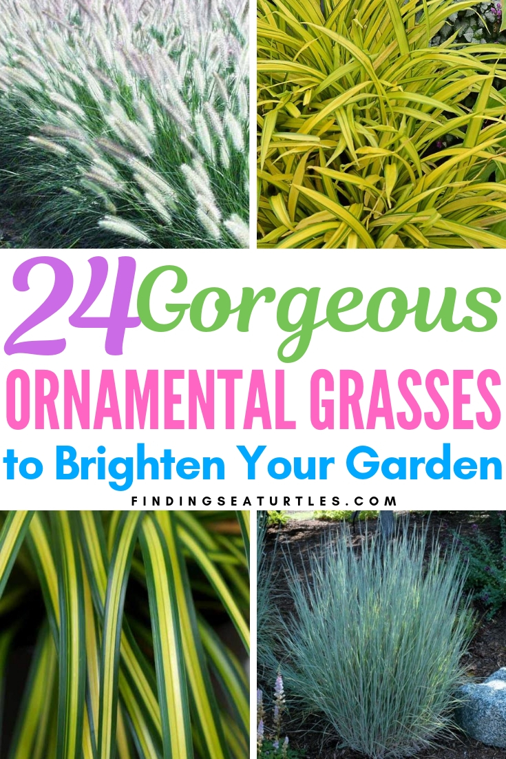 24 Gorgeous Ornamental Grasses To Brighten Your Garden #Grasses #OrnamentalGrasses #Perennials #Garden #Gardening #Landscape