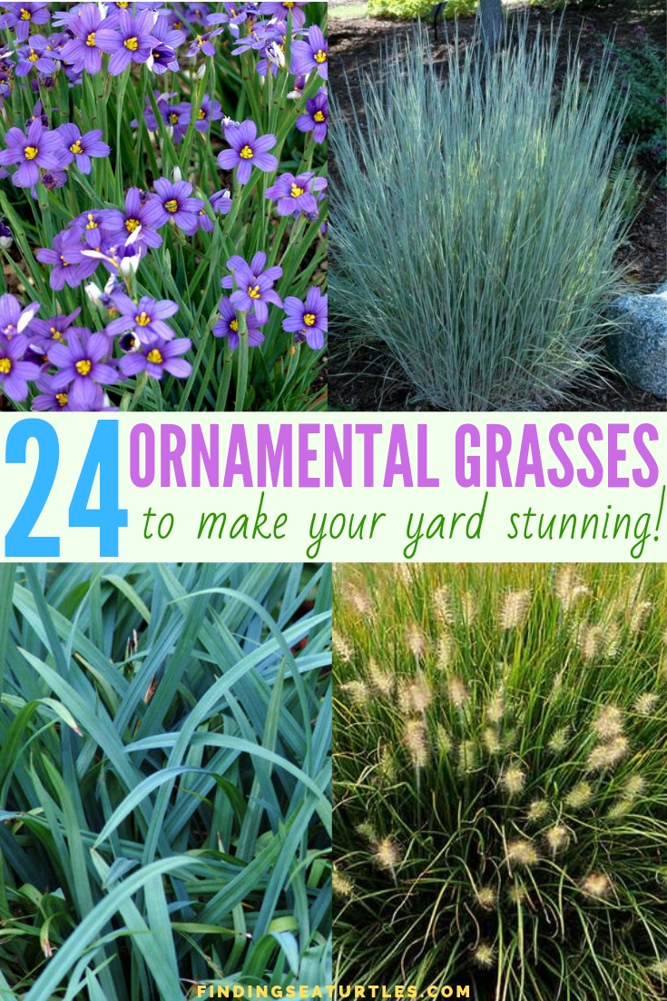 24 Ornamental Grasses To Make Your Yard Stunning #Grasses #OrnamentalGrasses #Perennials #Garden #Gardening #Landscape