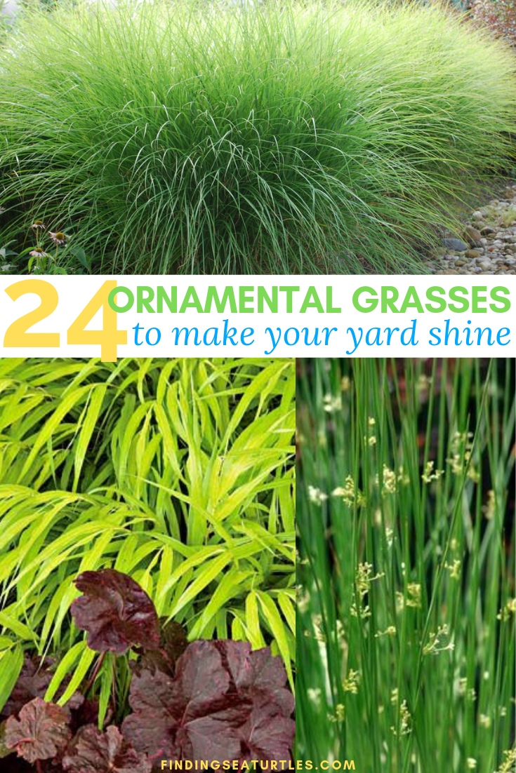 24 Ornamental Grasses To Make Your Yard Shine #Grasses #OrnamentalGrasses #Perennials #Garden #Gardening #Landscape
