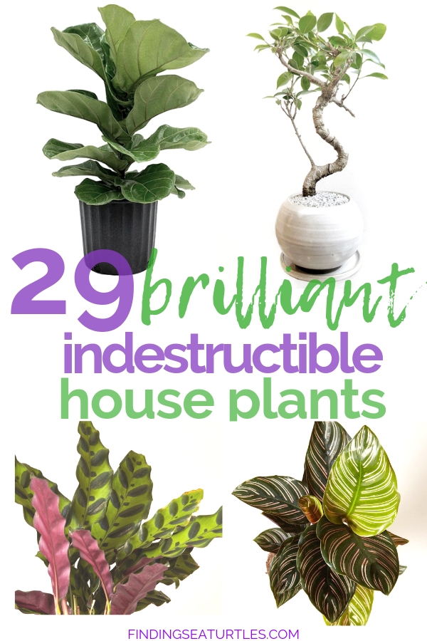 29 Brilliant Indestructible House Plants