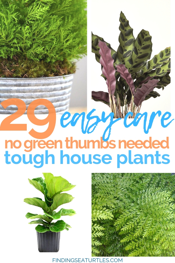 29 Tough No Green Thumbs Needed Easy House Plants #HousePlants #EasytoGrow #Gardening #LowMaintenance #HomeDecor #IndoorPlants #DIY