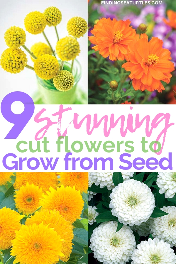 9 Cut Flowers To Grow From Seed #CutFlowers #Garden #Gardening #Summer #SummerGardening #CuttingGarden #Annuals #FlowerSeeds
