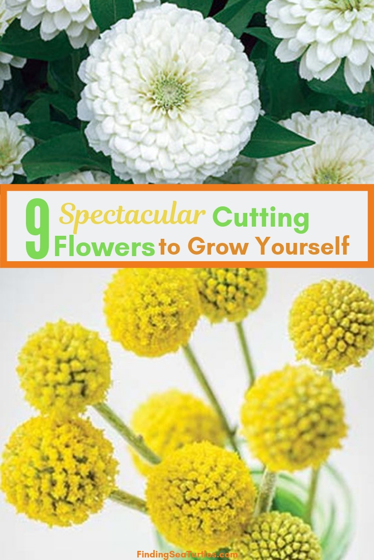9 Spectacular Cutting Flowers To Grow Yourself #CutFlowers #CuttingGarden #Garden  #Gardening #Landscape