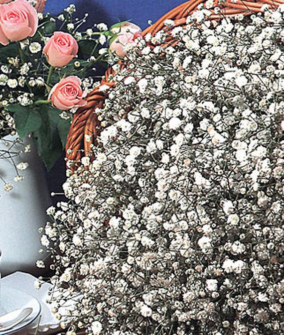 28 Best Perennials for a Cutting Flower Garden Early Snowball Baby's Breath #CutFlowers #Garden #Gardening #Spring #SpringGardening #CuttingGarden
