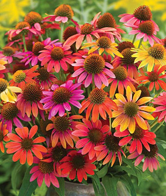 28 Best Perennials for a Cutting Flower Garden Warm Summer Echinacea #CutFlowers #Garden #Gardening #Spring #SpringGardening #CuttingGarden