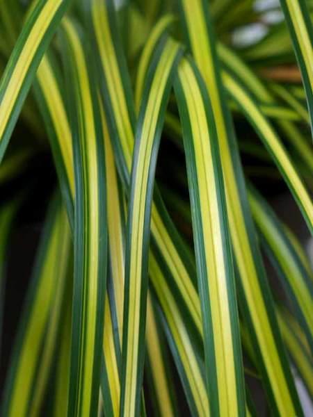 24 Best Ornamental Grasses Carex Eversheen #Grasses #OrnamentalGrasses #Perennials #Garden #Gardening #Landscape