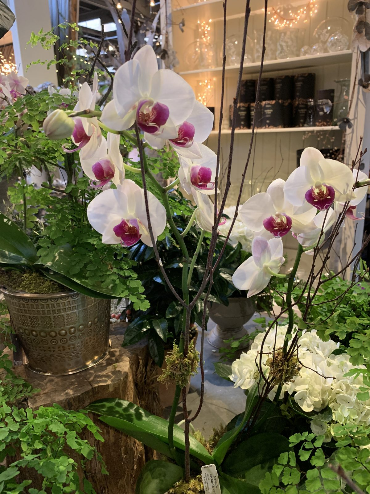 The Orchid Show 2019: Singapore Orchids #NYBG #NewYorkBotanticalGarden #TheOrchidShow #TheOrchidShowSingapore #Spring #SpringFlowers #Orchids #NYC