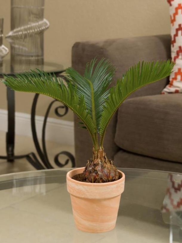 29 Easy Houseplants to Beat the Winter Blues! Sago Palm #HousePlants #EasytoGrow #Gardening #LowMaintenance #HomeDecor #IndoorPlants #DIY