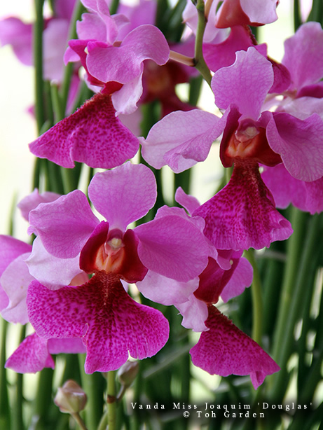 The Orchid Show 2019: Singapore
