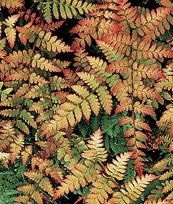 21 Best Ferns for Your Garden