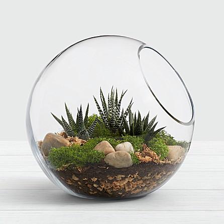 13 Best Indoor Succulents to Grow Now! Modern Succulent Terrarium Kit #Succulents #Garden #Gardening #HousePlants #Decor #HomeDecor #GrowYourOwn #Affordable #DIY #BudgetFriendly #GrowItYourself