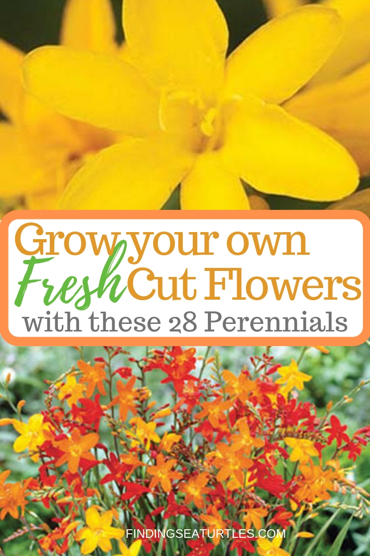 Fresh Cut Flowers With These 28 Perennials #CutFlowers #Garden #Gardening #Spring #SpringGardening #CuttingGarden