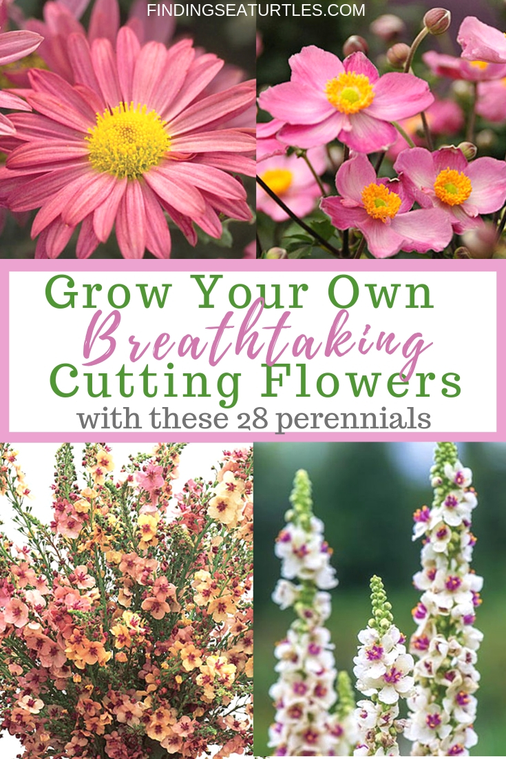 Grow Your Own Breathtaking Cutting Flowers with these 28 Perennials #CutFlowers #Garden #Gardening #Spring #SpringGardening #CuttingGarden