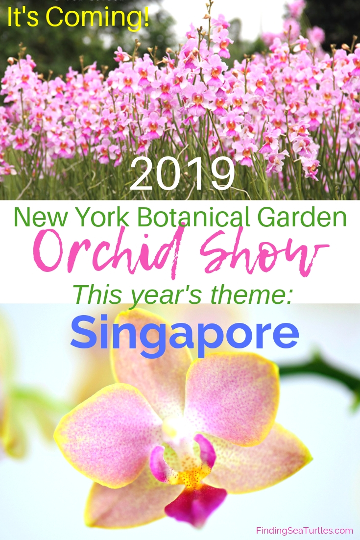It's Coming! The NY Orchid Show 2019 Featuring Singapore #NYBG #NewYorkBotanticalGarden #TheOrchidShow #TheOrchidShowSingapore #Spring #SpringFlowers #Orchids #NYC #VandaMissJoaquim #SingaporesNationalFlower
