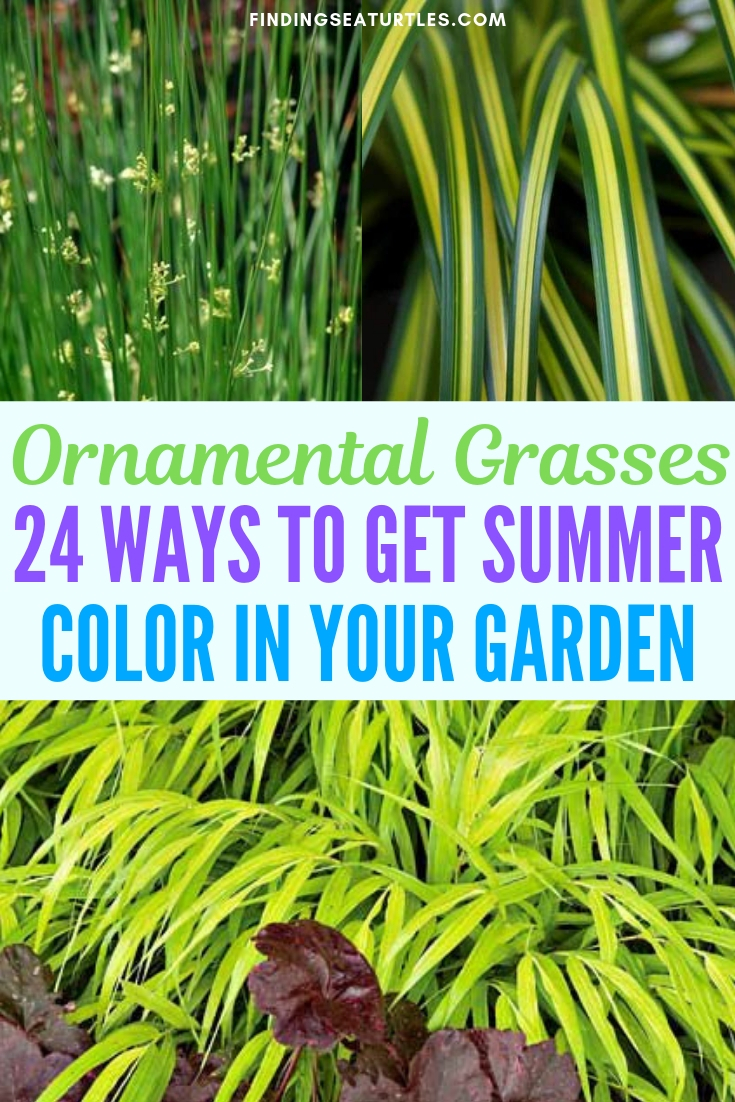 Ornamental Grasses 24 Ways To Get Summer Color In Your Garden #Grasses #OrnamentalGrasses #Perennials #Garden #Gardening #Landscape