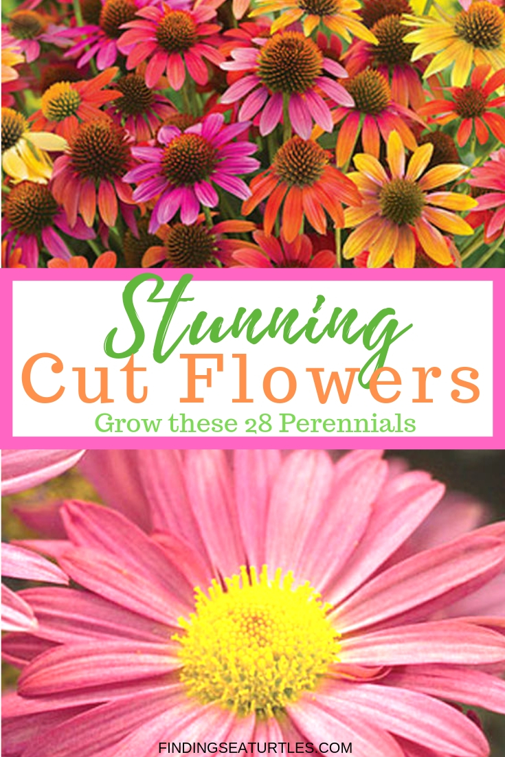 Stunning Cut Flowers With These 28 Perennials #CutFlowers #Garden #Gardening #Spring #SpringGardening #CuttingGarden