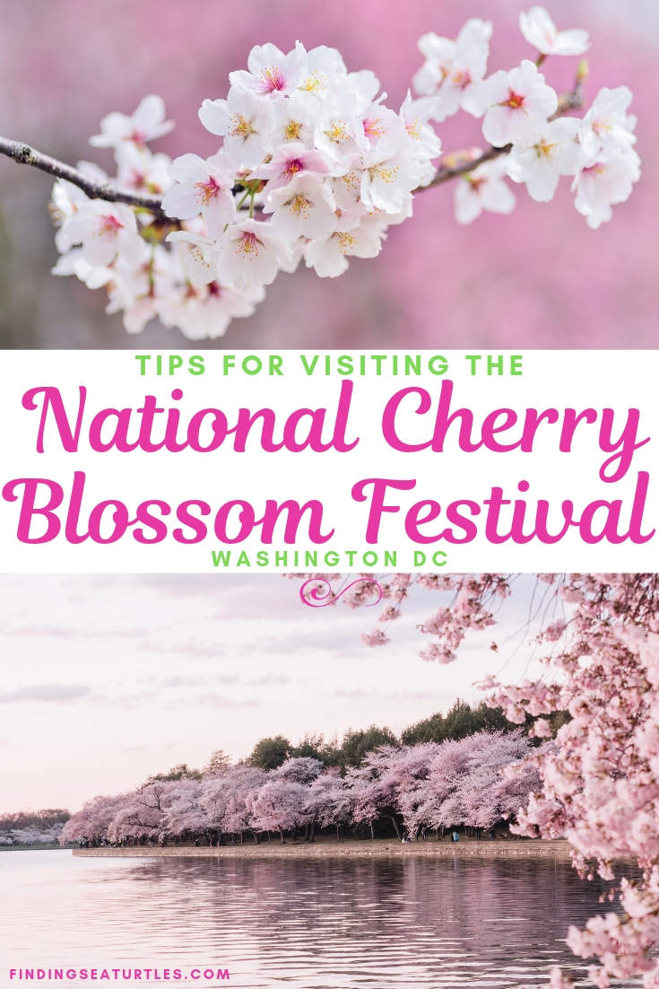 Visit the Spectacular National Cherry Blossom Festival 2019 in Washington DC Tips For Visiting The National Cherry Blossom Festival #NationalCherryBlossomFestival #WashingtonDC #CherryBlossomsFestival #CherryBlossoms