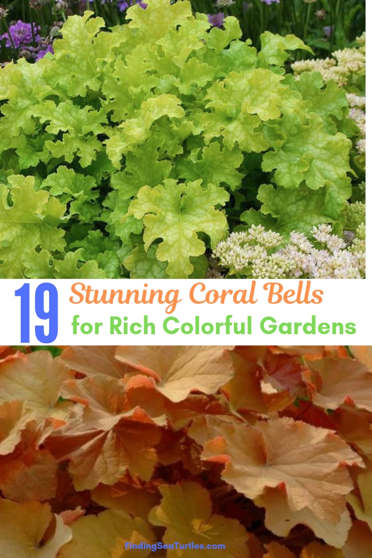 19 Stunning Coral Bells For Rich Colorful Gardens #Heuchera #CoralBells #Shade #ShadeGarden #Garden #Gardening #Landscape