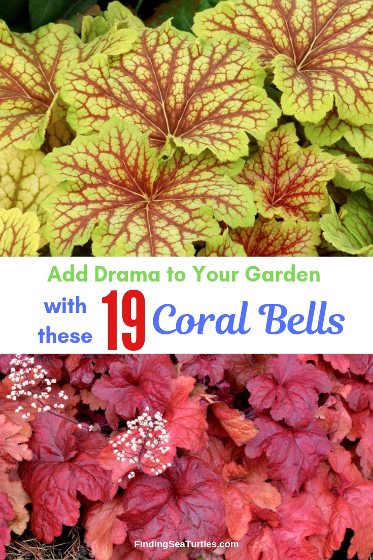 Add Drama To Your Garden 19 Coral Bells #Heuchera #CoralBells #Shade #ShadeGarden #Garden #Gardening #Landscape