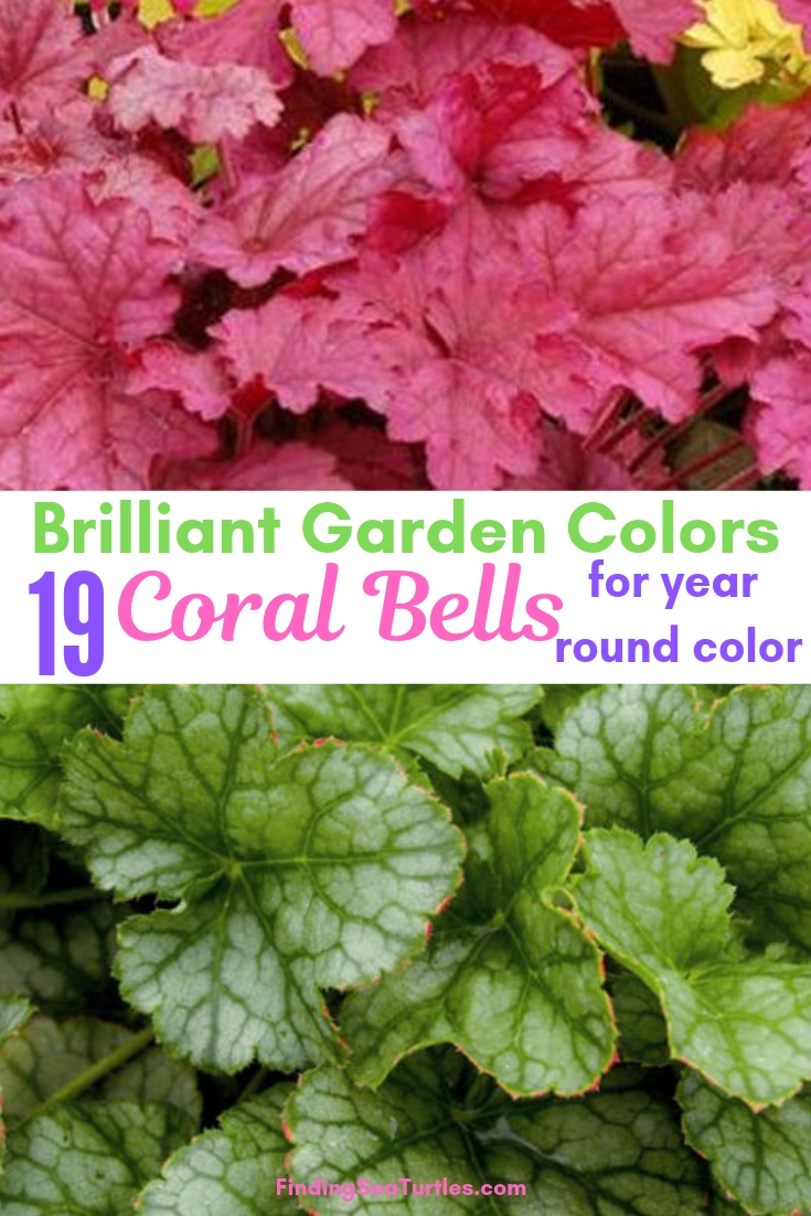 Brilliant Garden Colors 19 Coral Bells For Year Round Color #Heuchera #CoralBells #Shade #ShadeGarden #Garden #Gardening #Landscape