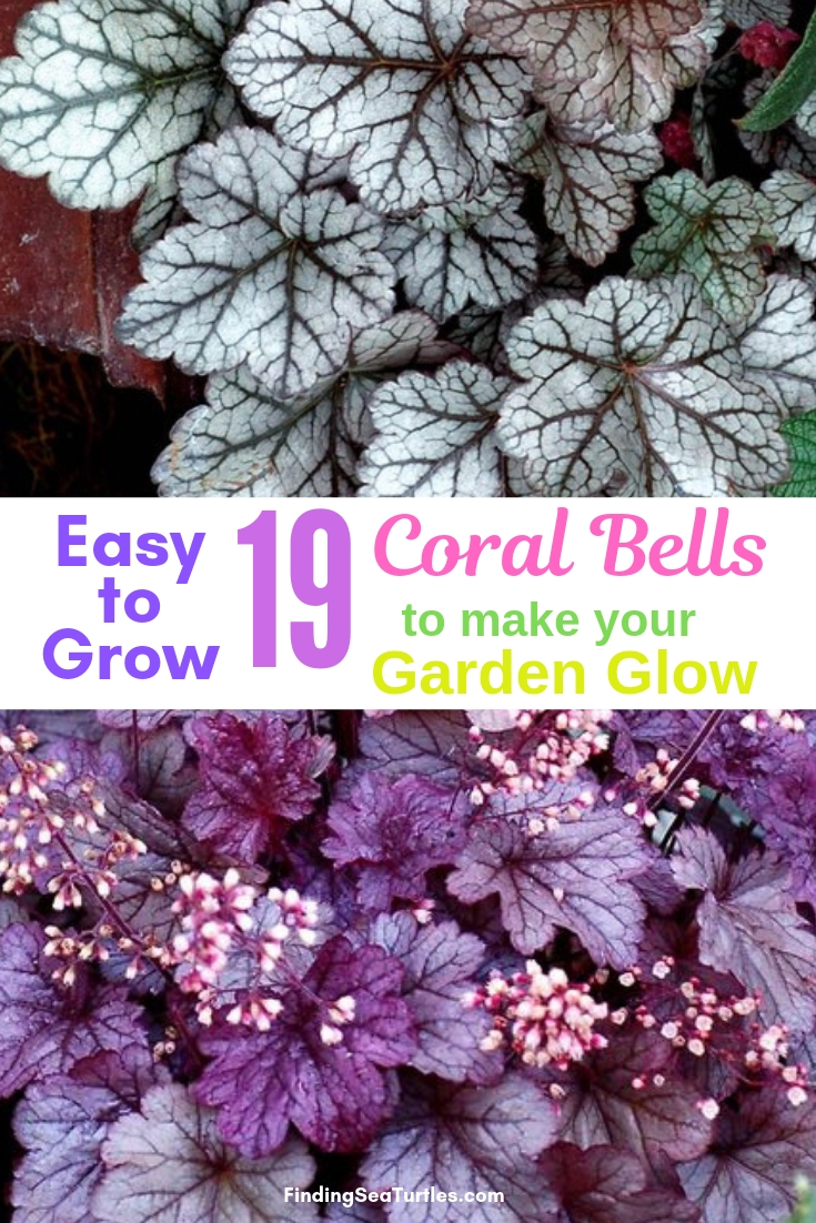 Easy To Grow 19 Coral Bells To Make Your Garden Glow #Heuchera #CoralBells #Shade #ShadeGarden #Garden #Gardening #Landscape