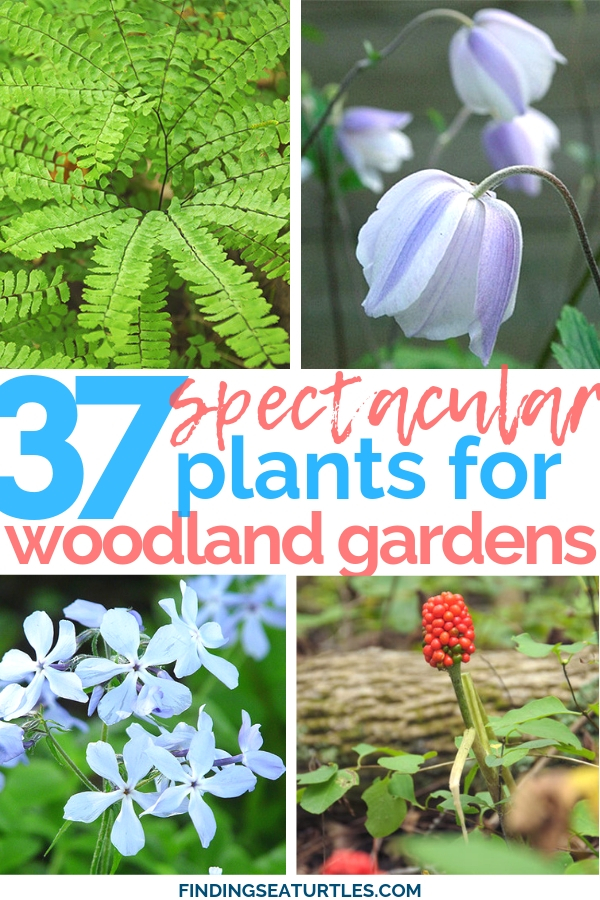 37 Spectacular Plants For Woodland Gardens #Garden #Gardening #Landscaping #Woodland #WoodlandGarden #NativePlants #Perennials #GardenPerennials