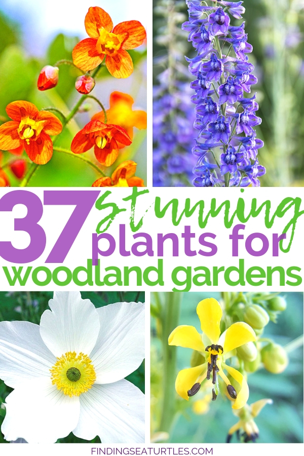 37 Stunning Plants For Woodland Flowers #Garden #Gardening #Landscaping #Woodland #WoodlandGarden #NativePlants #Perennials #GardenPerennials