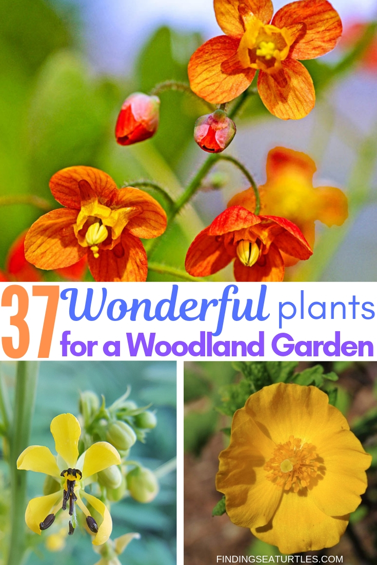 37 Wonderful Plants For A Woodland Garden #Garden #Gardening #Landscaping #Woodland #WoodlandGarden #NativePlants #Perennials #GardenPerennials