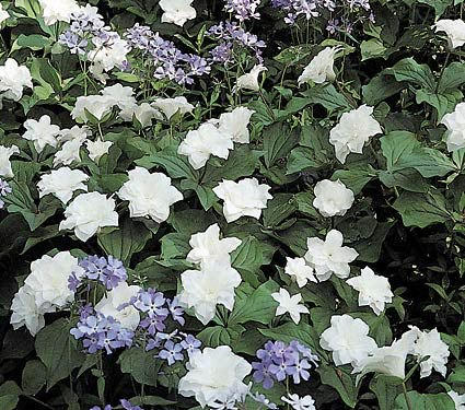 Create a Garden Wonderland with Woodland Plants White Wake Robin #Garden #Gardening #Landscaping #Woodland #WoodlandGarden #NativePlants #Perennials #GardenPerennials