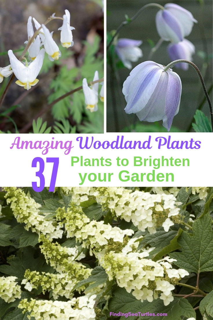 Amazing Woodland Plants 37 Plants To Brighten Your Garden #Garden #Gardening #Landscaping #Woodland #WoodlandGarden #NativePlants #Perennials #GardenPerennials
