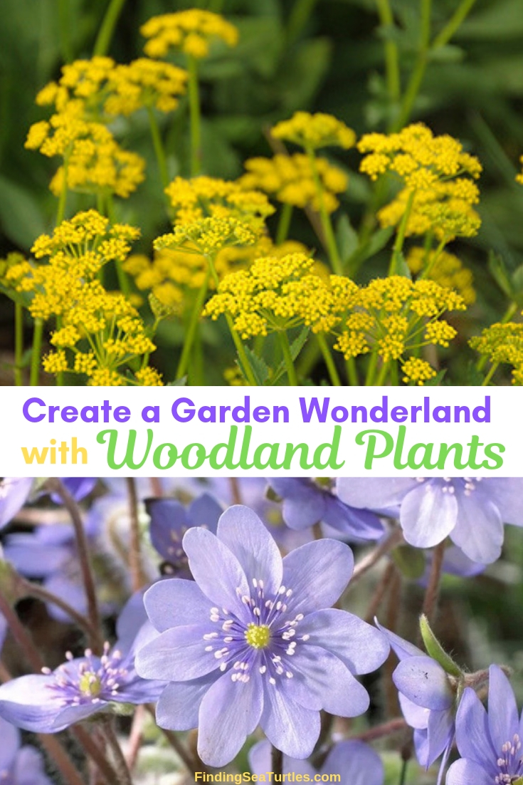 Create A Garden Wonderland With Woodland Plants #Garden #Gardening #Landscaping #Woodland #WoodlandGarden #NativePlants #Perennials #GardenPerennials