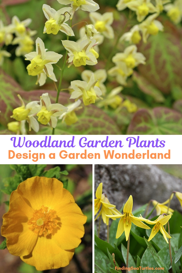 Woodland Garden Plants Design A Garden Wonderland #Garden #Gardening #Landscaping #Woodland #WoodlandGarden #NativePlants #Perennials #GardenPerennials