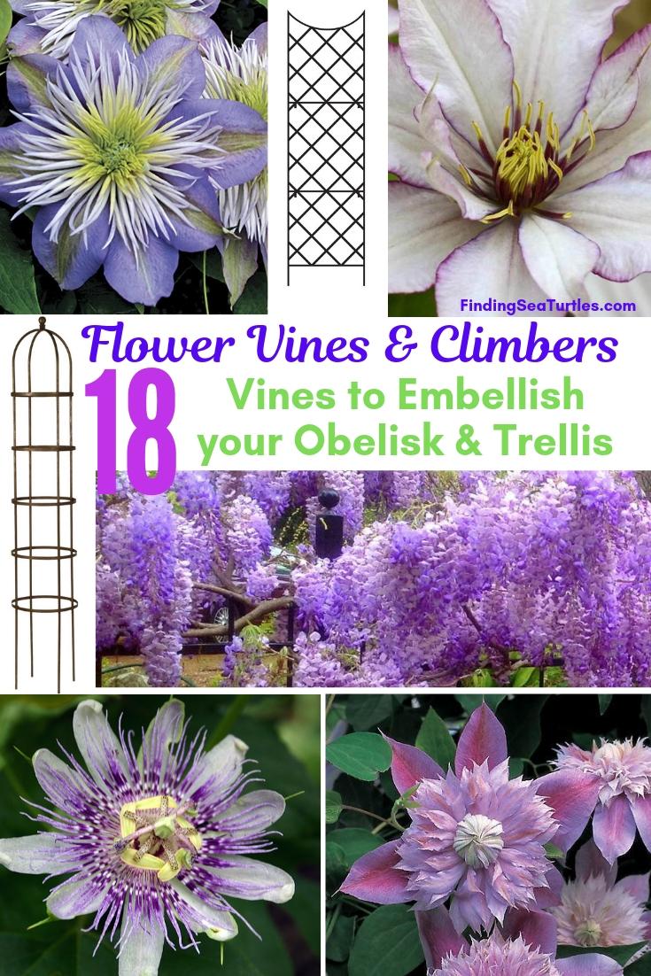 Flower Vines Climbers 18 Vines To Embellish Your Obelisk Trellis #Perennials #Garden #Gardening #Vines #Climbers #Landscape #Trellis #Obelisk #GardenArbors