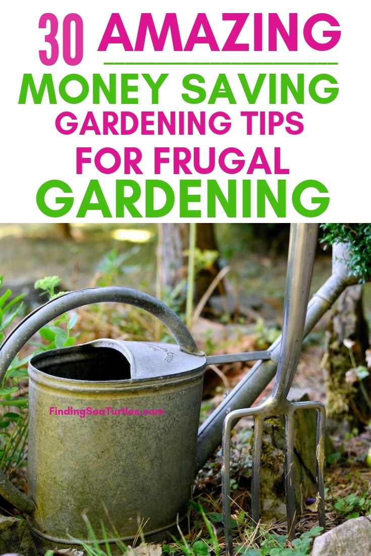 30 AMAZING Money Saving Gardening Tips For Frugal Gardening #SaveMoney #MoneySavingTips #SaveTime #GardenSavings #Garden #Gardening #Landscape #BudgetFriendly #FrugalLiving #FrugalGardening #ThriftyGardening