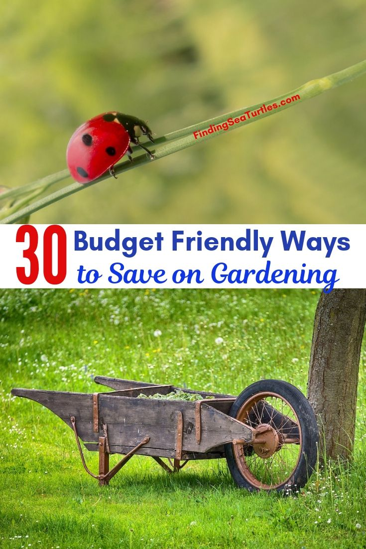30 Budget Friendly Ways To Save On Gardening #SaveMoney #MoneySavingTips #SaveTime #GardenSavings #Garden #Gardening #Landscape #BudgetFriendly #FrugalLiving #FrugalGardening #ThriftyGardening