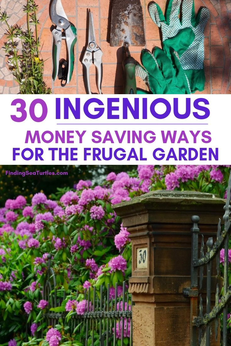 30 INGENIOUS Money Saving Ways For The Frugal Garden #SaveMoney #MoneySavingTips #SaveTime #GardenSavings #Garden #Gardening #Landscape #BudgetFriendly #FrugalLiving #FrugalGardening #ThriftyGardening