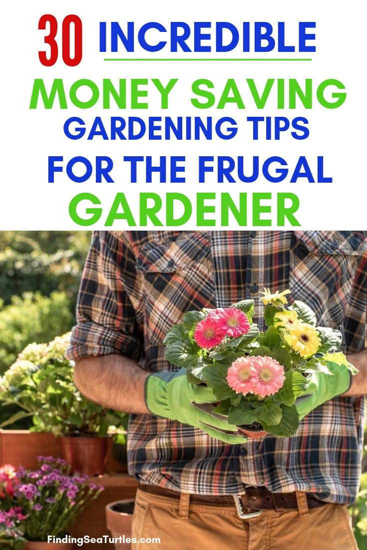 30 Incredible Money Saving Gardening Tips For The Frugal Gardener #SaveMoney #MoneySavingTips #SaveTime #GardenSavings #Garden #Gardening #Landscape #BudgetFriendly #FrugalLiving #FrugalGardening #ThriftyGardening