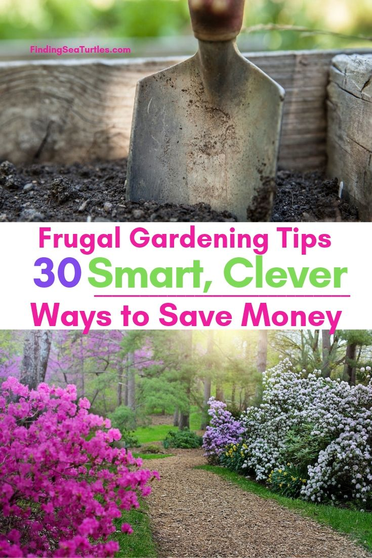 Frugal Gardening Tips 30 Smart, Clever Ways To Save Money #SaveMoney #MoneySavingTips #SaveTime #GardenSavings #Garden #Gardening #Landscape #BudgetFriendly #FrugalLiving #FrugalGardening #ThriftyGardening