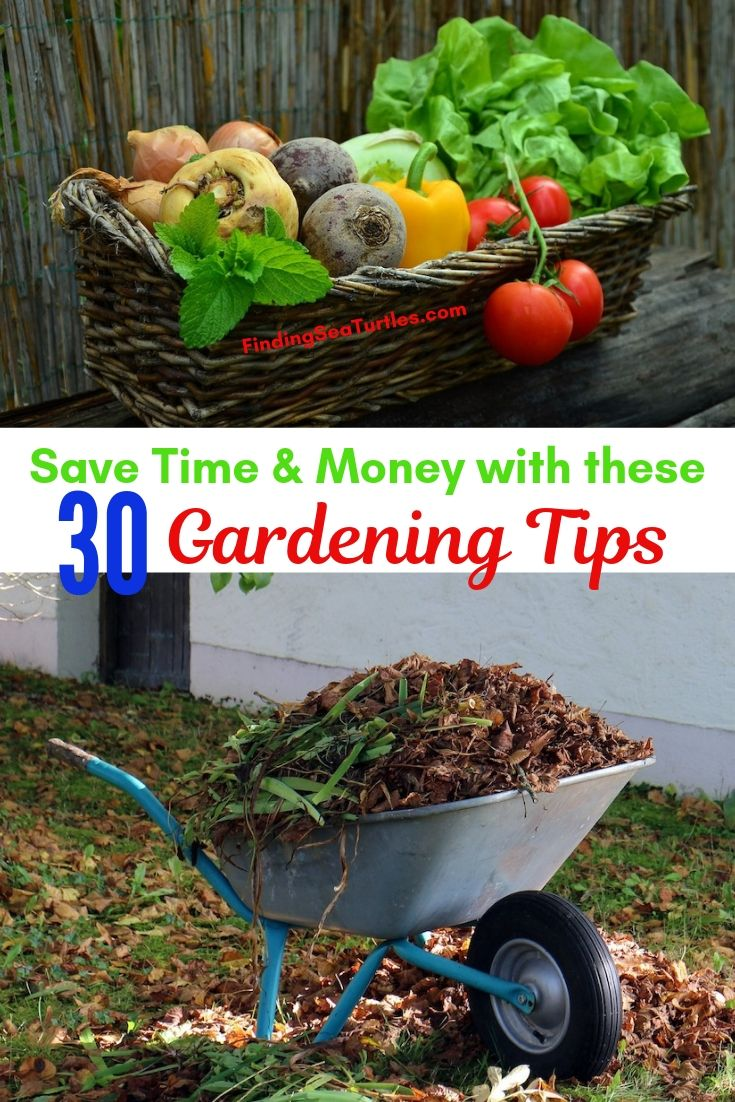 Save Time & Money With These 30 Gardening Tips #SaveMoney #MoneySavingTips #SaveTime #GardenSavings #Garden #Gardening #Landscape #BudgetFriendly #FrugalLiving #FrugalGardening #ThriftyGardening