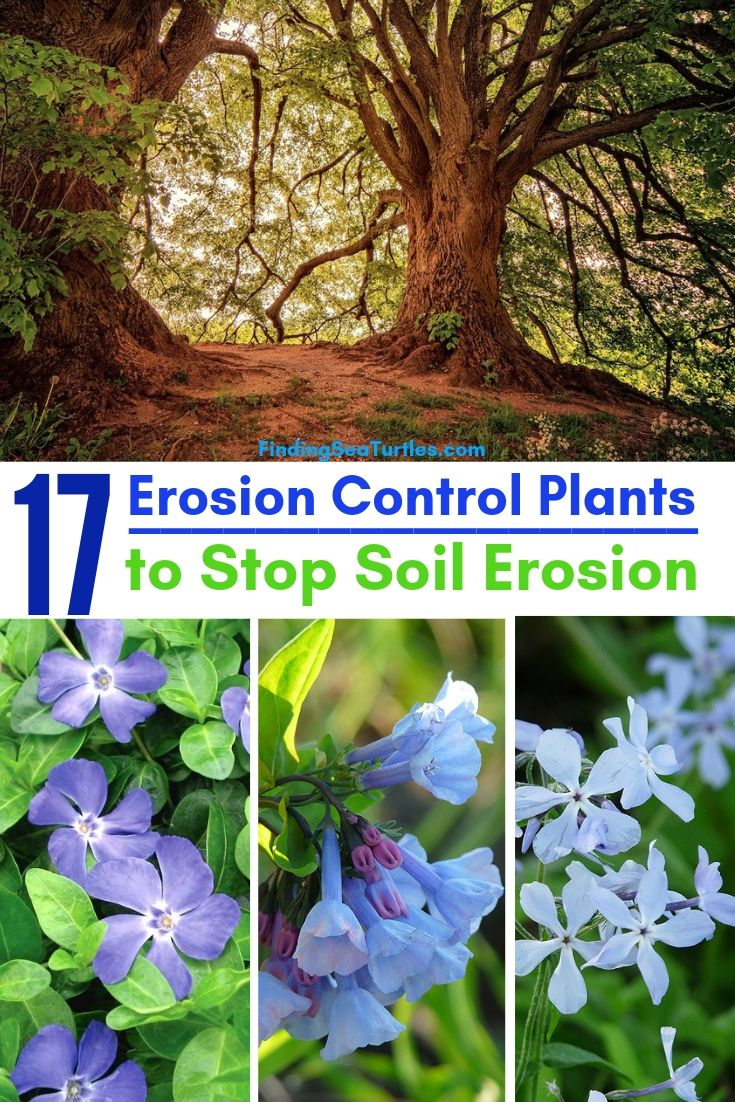 17 Erosion Control Plants To Stop Soil Erosion #Garden #Gardening #Landscape #Landscaping #ErosionControl #ErosionControlPlants #StopErosion
