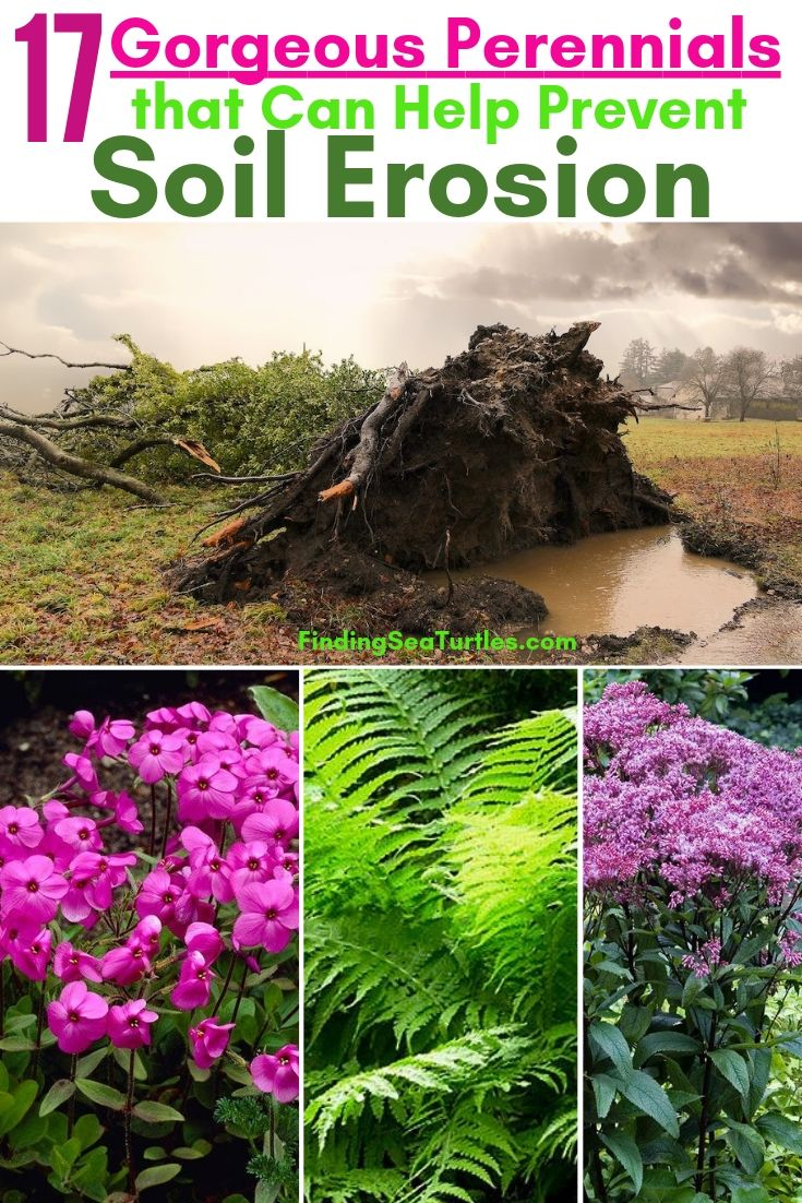 17 Gorgeous Perennials That Can Help Prevent Soil Erosion #Garden #Gardening #Landscape #Landscaping #ErosionControl #ErosionControlPlants #StopErosion