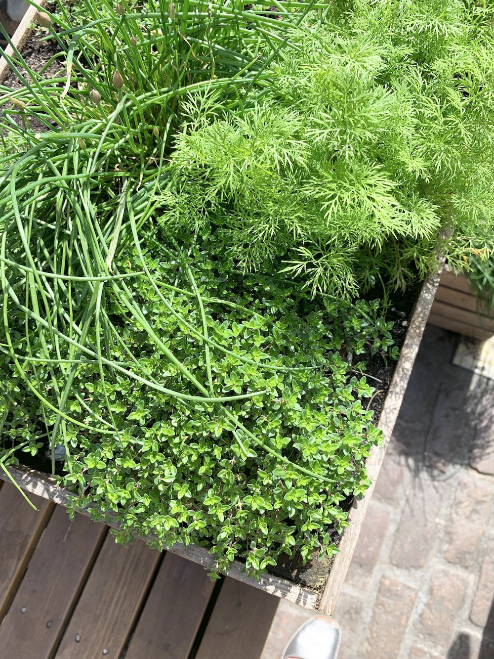 Crate Gardening for Small Spaces Crate Full of Herbs #Garden #Gardening #SmallSpace #SmallSpaceGardening #ContainerGardening #VegetableGarden #HerbGarden #PorchGarden #PatioGarden