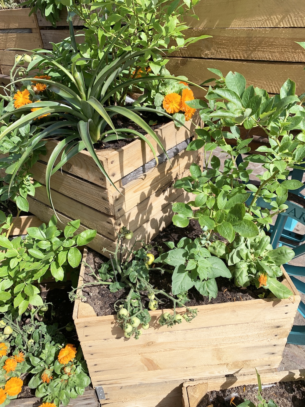 Crate Gardening for Small Spaces Crate Gardening #Garden #Gardening #SmallSpace #SmallSpaceGardening #ContainerGardening #VegetableGarden #HerbGarden #PorchGarden #PatioGarden