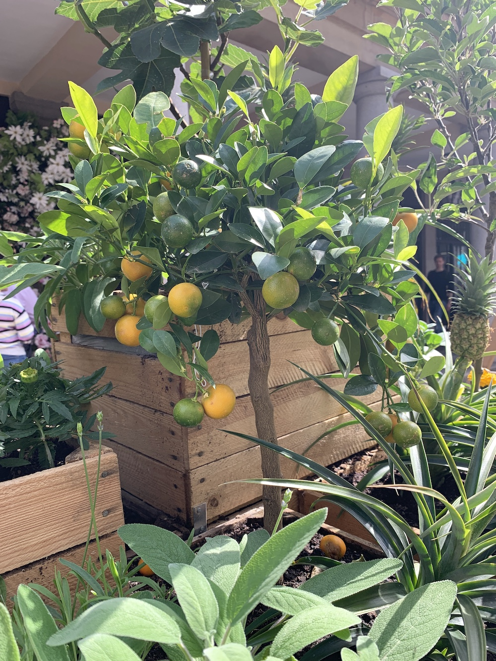 Crate Gardening for Small Spaces Lemon Tree #Garden #Gardening #SmallSpace #SmallSpaceGardening #ContainerGardening #VegetableGarden #HerbGarden #PorchGarden #PatioGarden