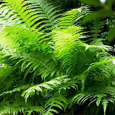 Garden Erosion Control Plants for Slopes and Banks Lady Fern #Garden #Gardening #Landscape #Landscaping #ErosionControl #ErosionControlPlants #StopErosion
