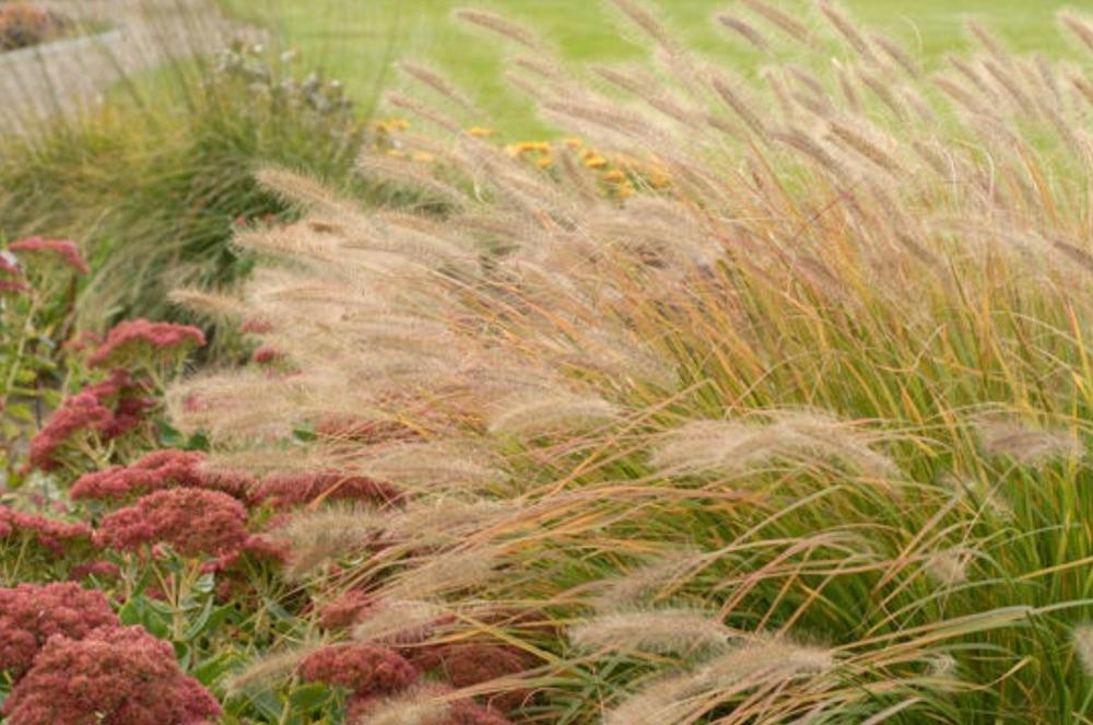 Garden Erosion Control Plants for Slopes and Banks Prairie Winds Desert Plains #Garden #Gardening #Landscape #Landscaping #ErosionControl #ErosionControlPlants #StopErosion