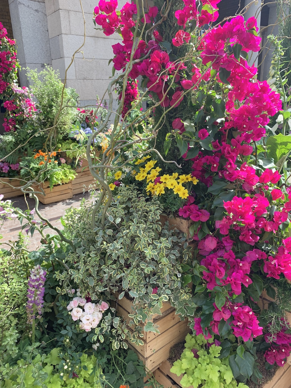 Crate Gardening for Small Spaces Bougainvillea Vine #Garden #Gardening #SmallSpace #SmallSpaceGardening #ContainerGardening #FlowerGarden #PorchGarden #PatioGarden