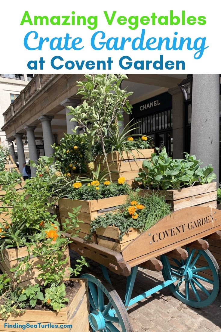 Amazing Vegetables Crate Gardening At Covent Garden #Garden #Gardening #SmallSpace #SmallSpaceGardening #ContainerGardening #VegetableGarden #HerbGarden #PorchGarden #PatioGarden