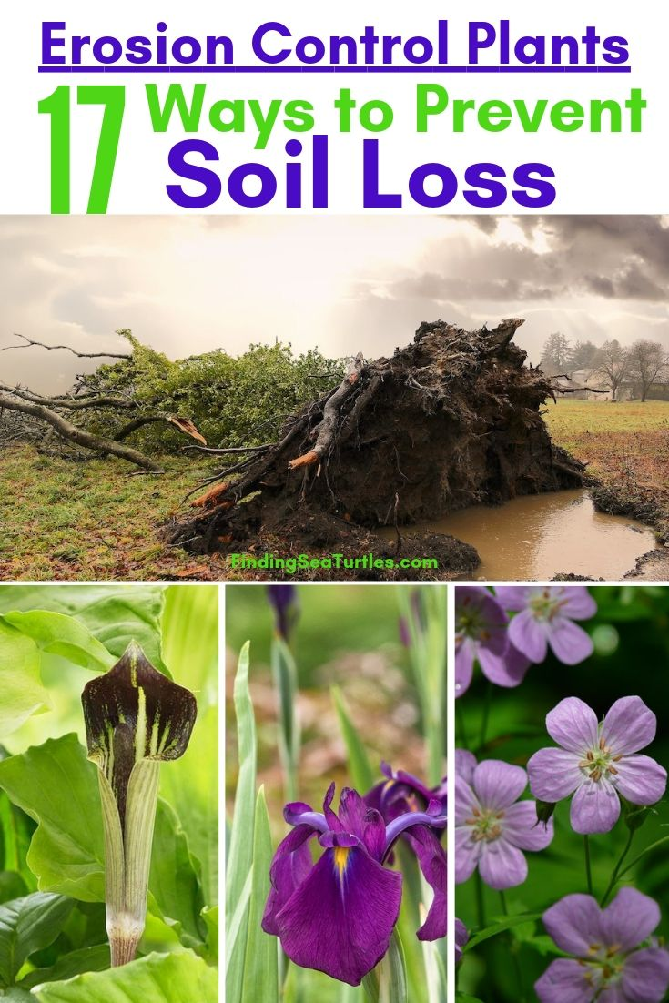 Erosion Control Plants 17 Ways To Prevent Soil Loss #Garden #Gardening #Landscape #Landscaping #ErosionControl #ErosionControlPlants #StopErosion